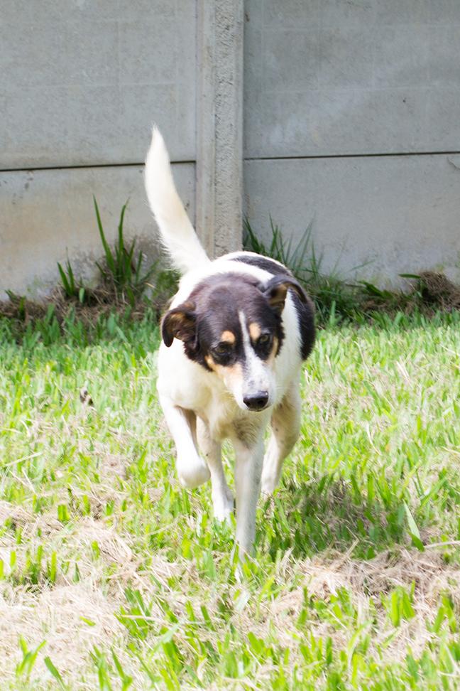 ZooLógica- Animais para adoção (8).jpg