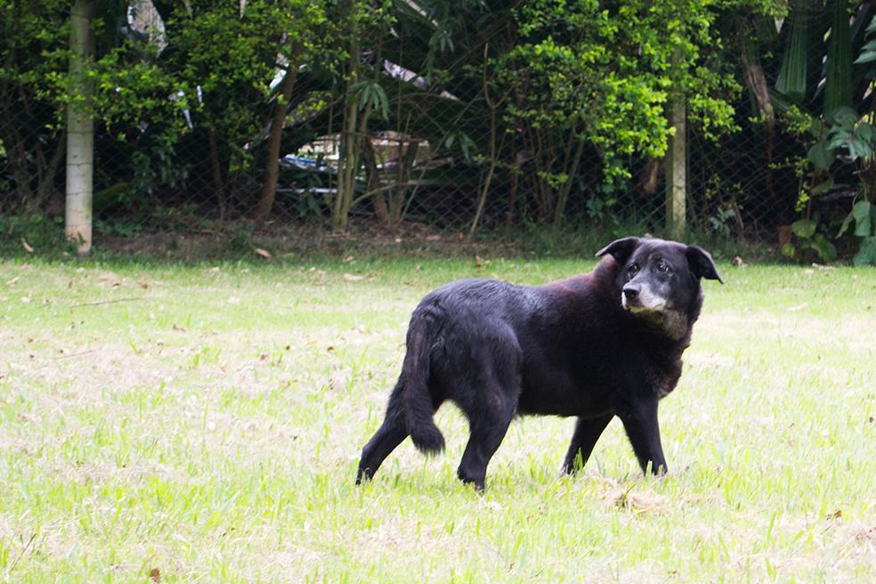 ZooLógica- Animais para adoção (25).jpg