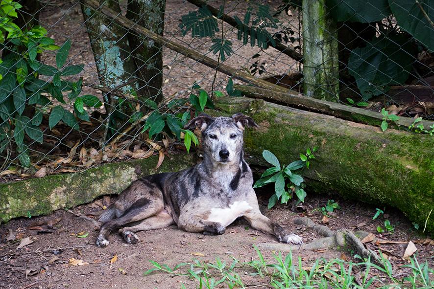 ZooLógica- Animais para adoção (4).jpg
