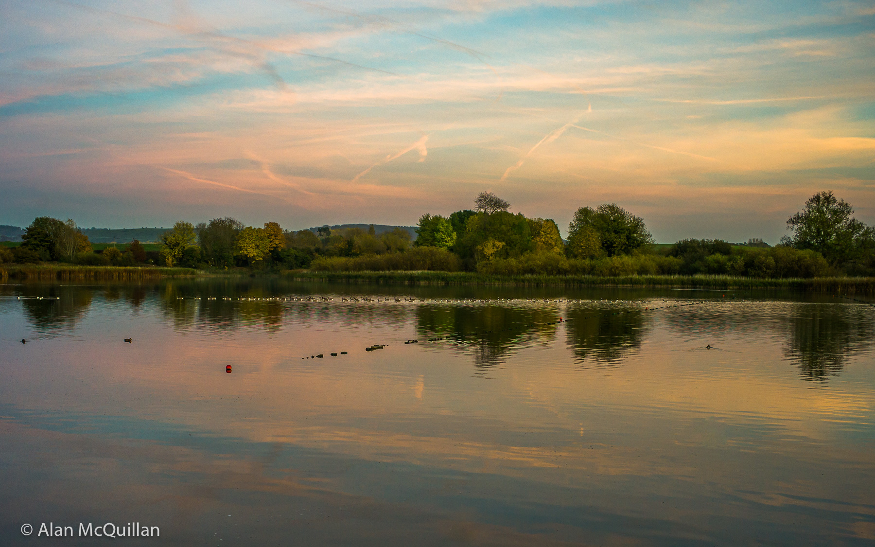 Geese at dusk on Startopsend Resevoir, Buckinghamshire