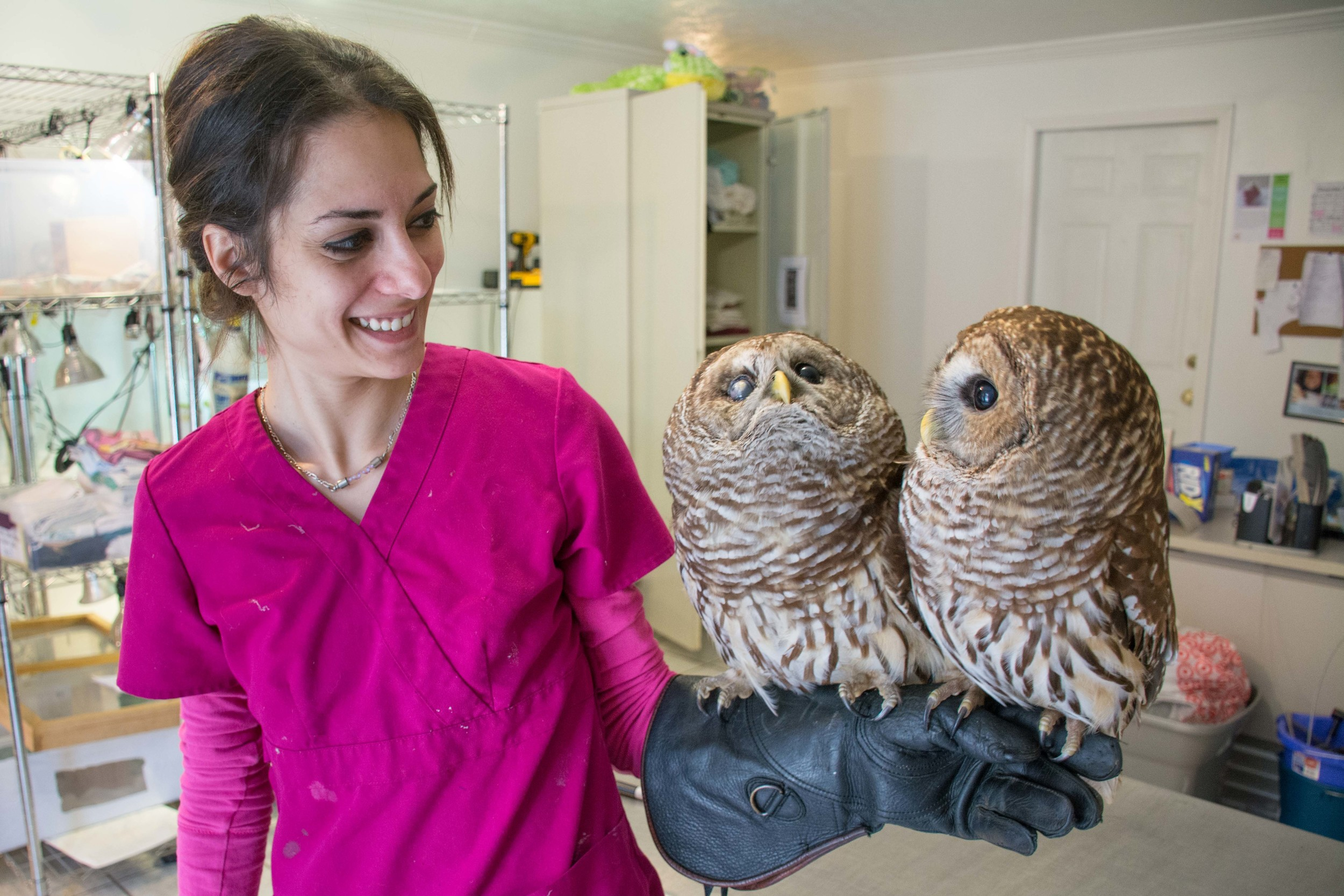 Marjan Ghadrdan with barred owls Gazer & Tappy -  click to enlarge