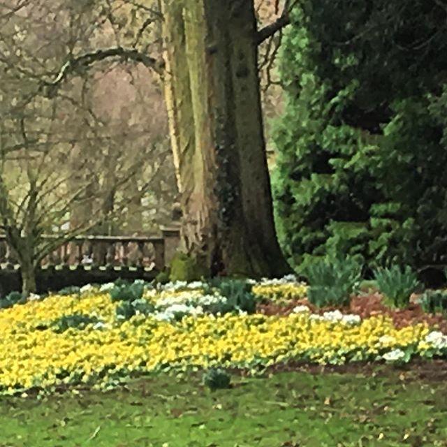 bellissimi fiori. . . . . . #insta #scenery #buzz #picture #tree #flower #uk #farm #fiori #flowerstagram #gardenflowers #beautiful  #photooftheday #lincolnshire  #lincolnshirewolds