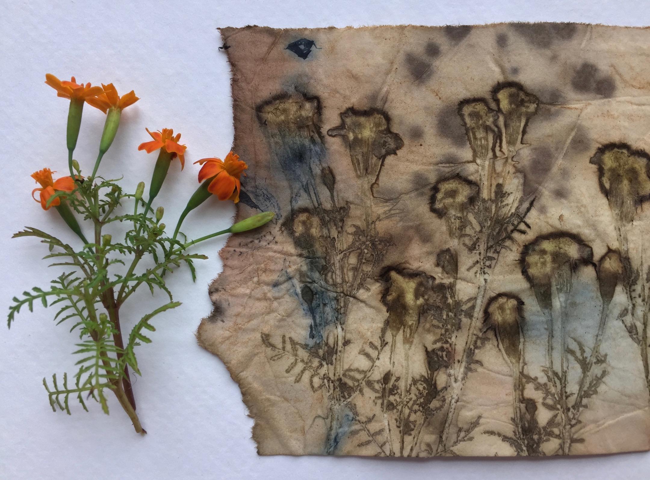 mini marigolds.jpg