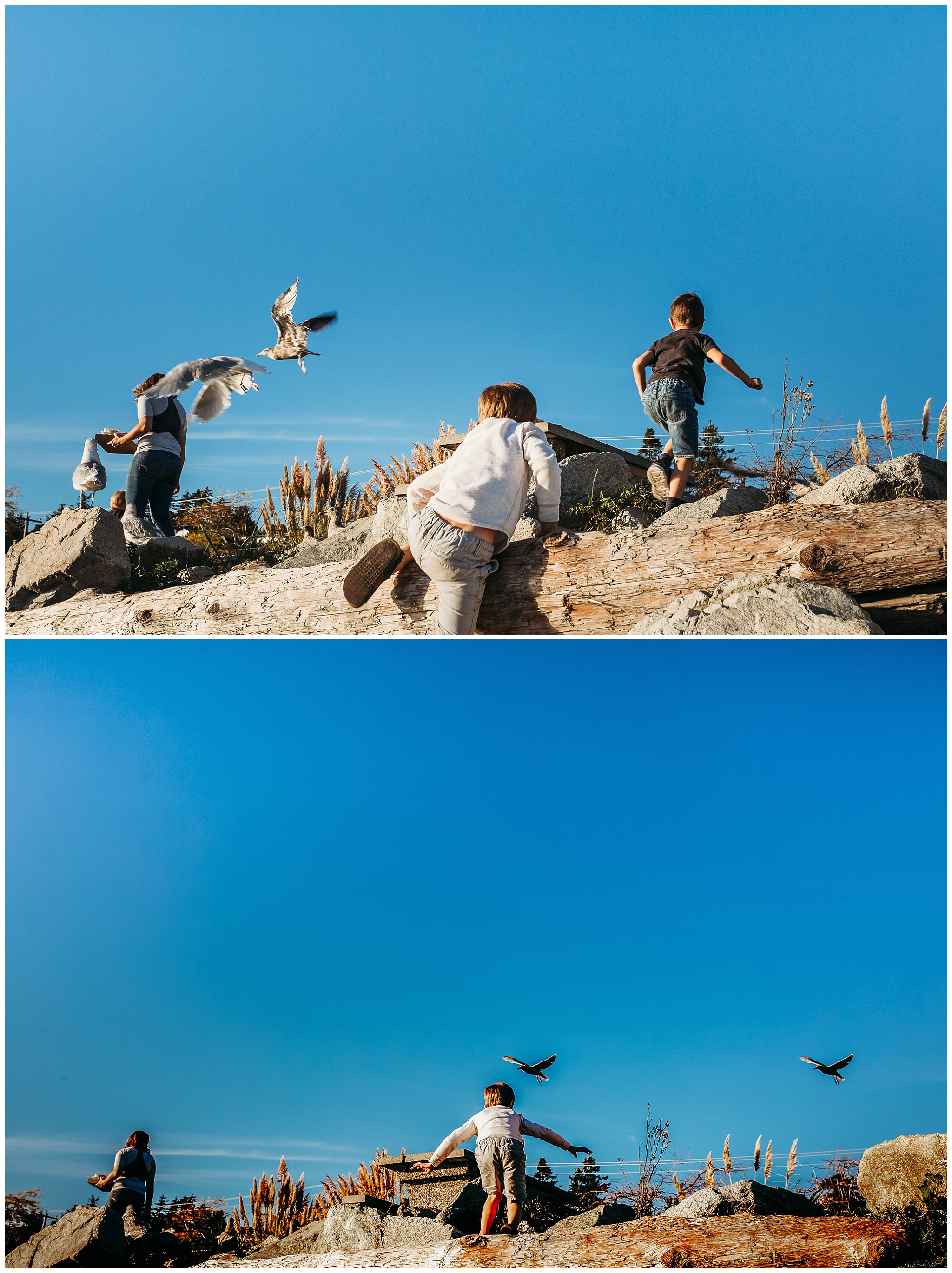 boys chasing seagulls at the pacific ocean