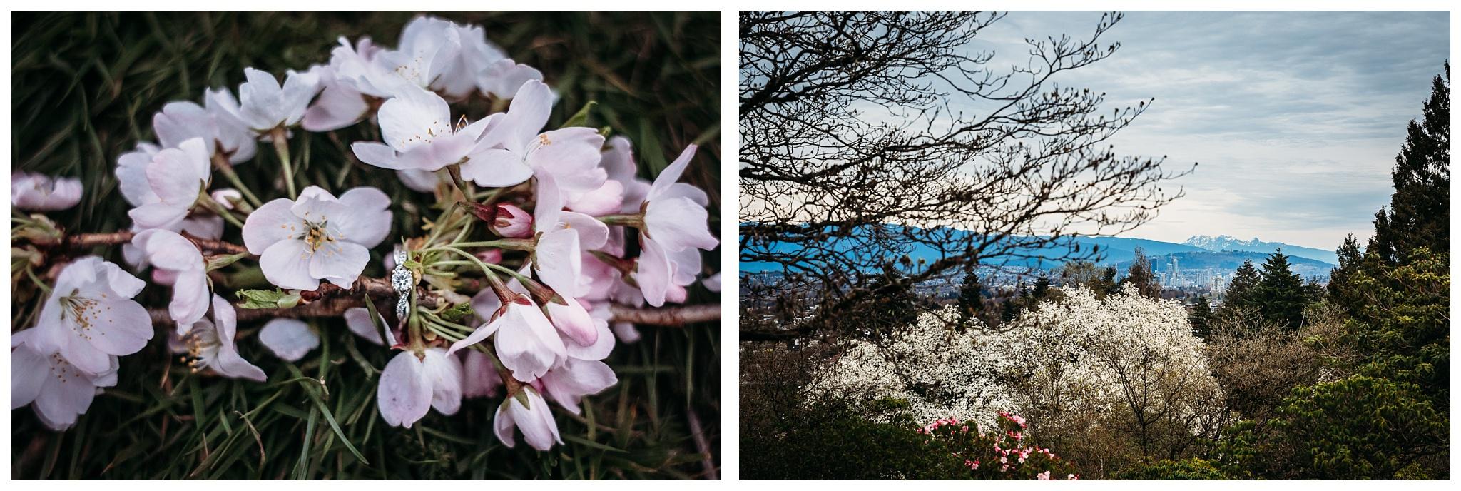 Queen Elizabeth Park Spring Engagement Photography Cherry Blossom Photos Couple Romantic_0015.jpg