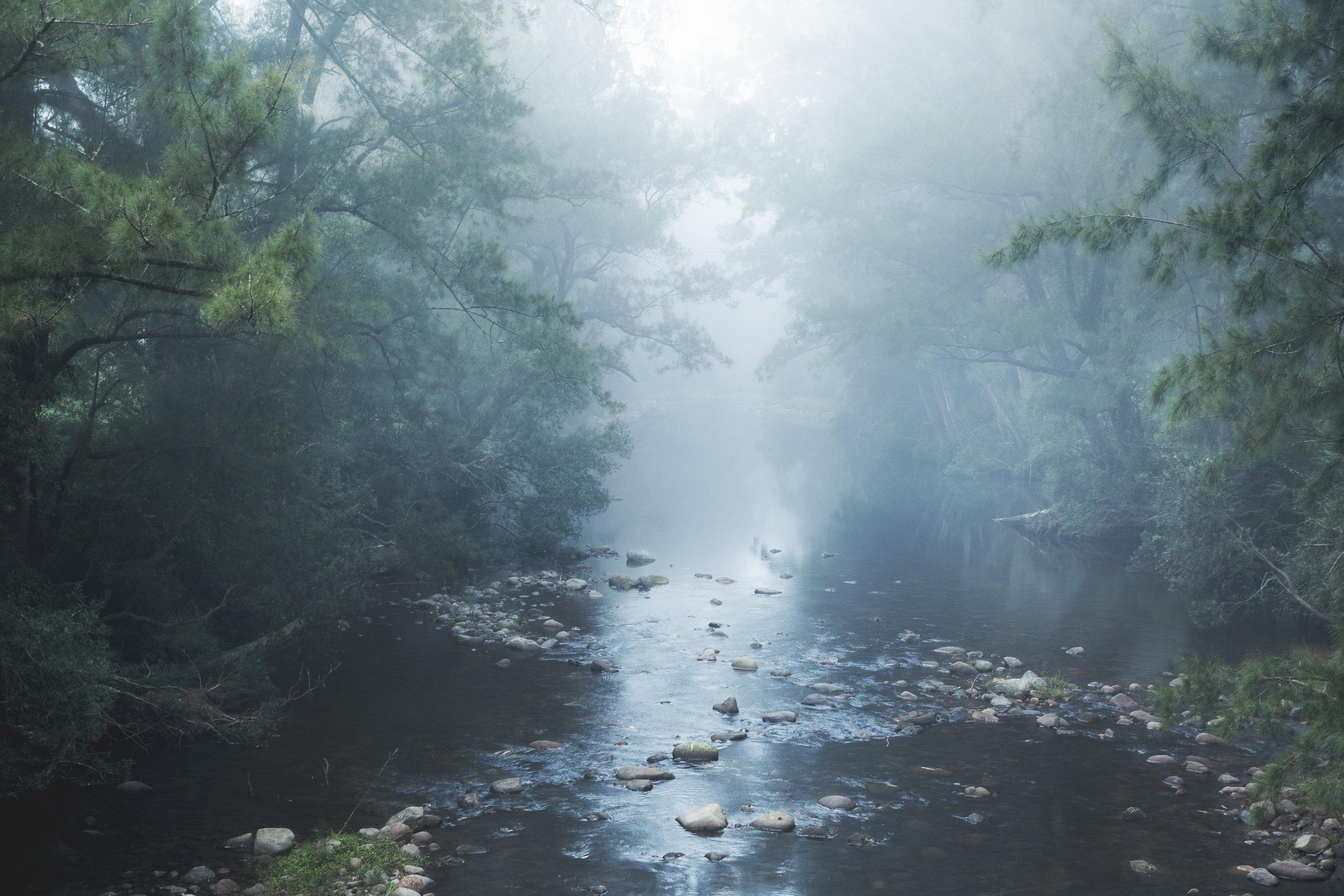 Kangeroo Vally mist .jpg