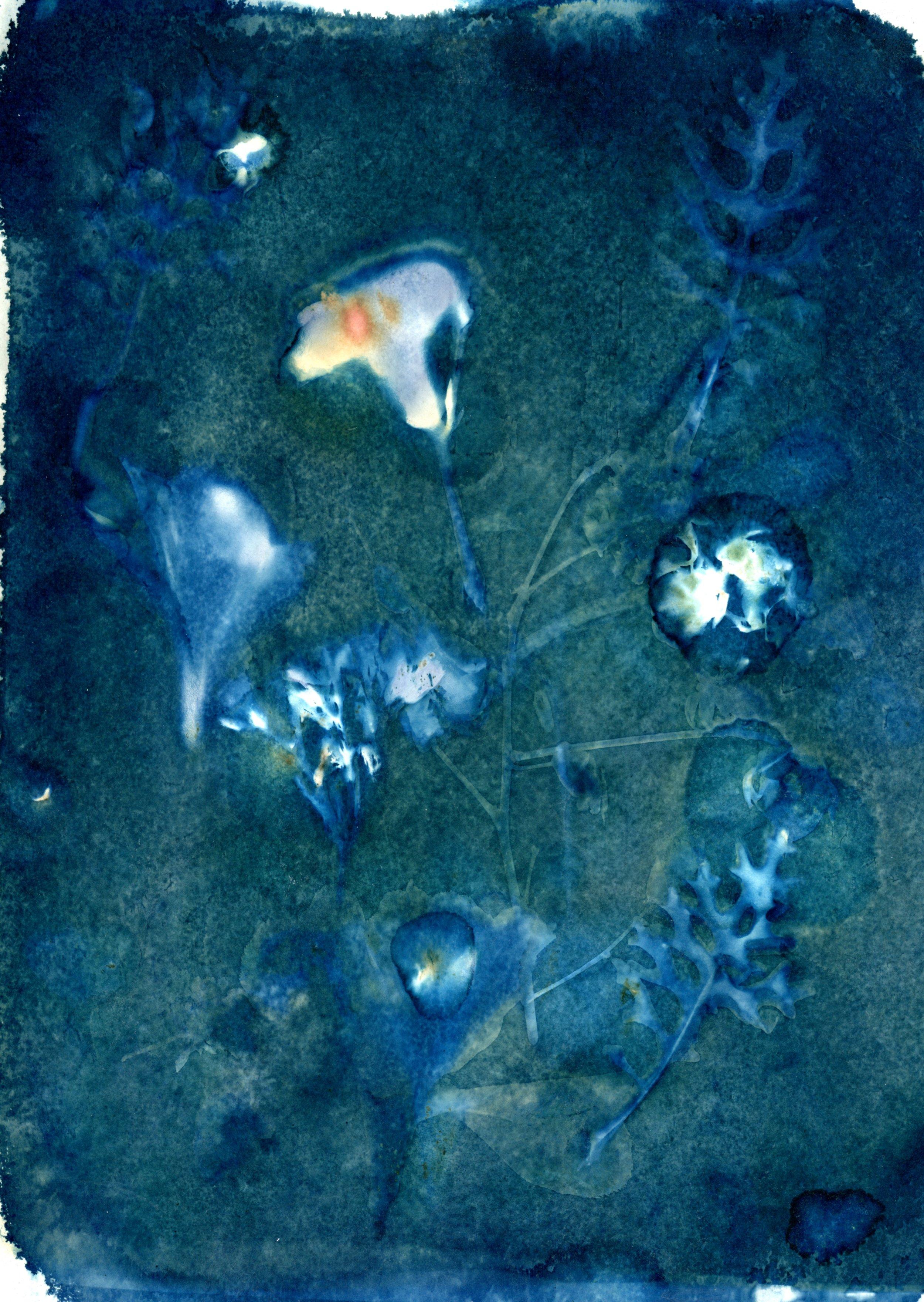October 3 wet cyan001.jpg