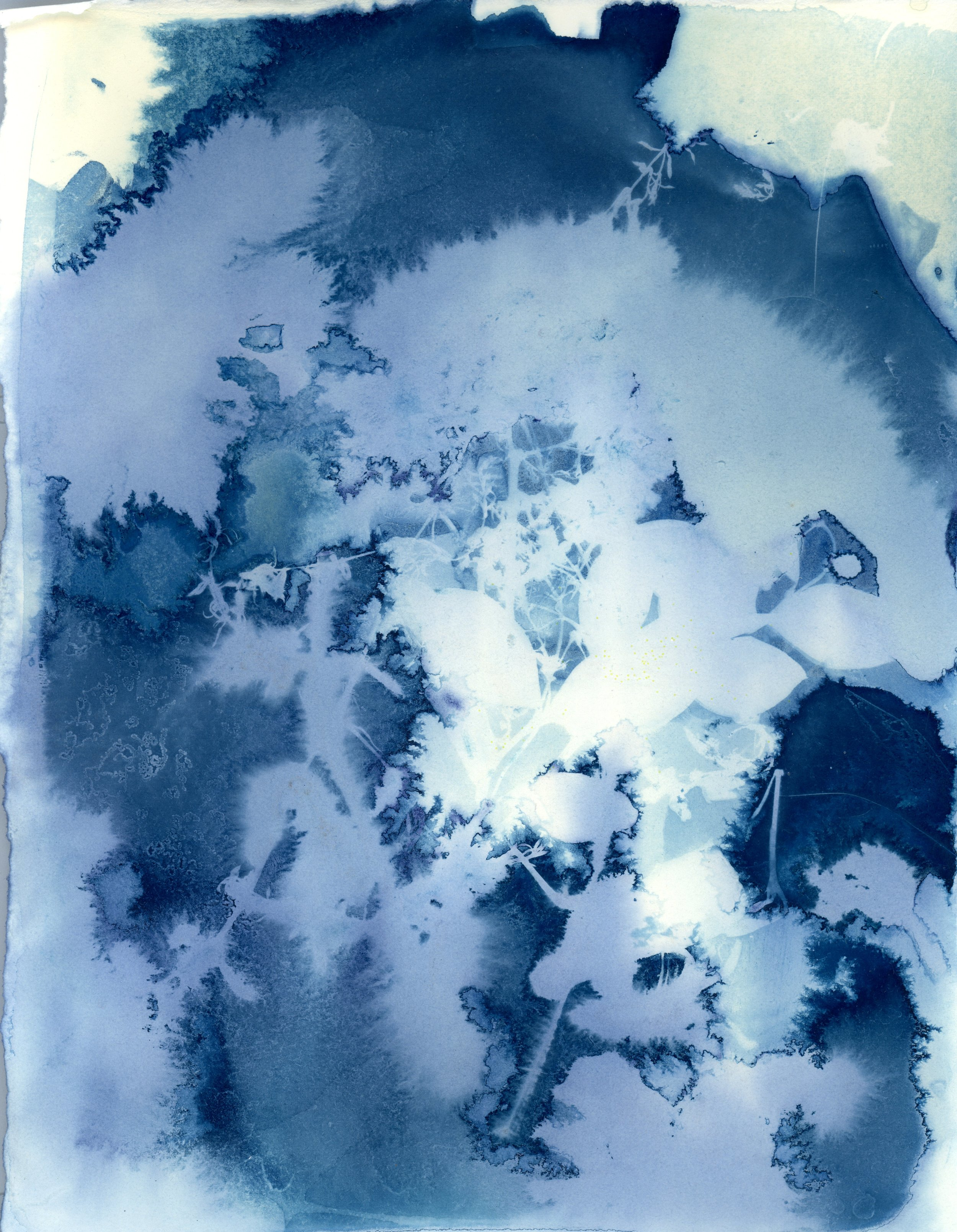 Mixed cyanotype001.jpg