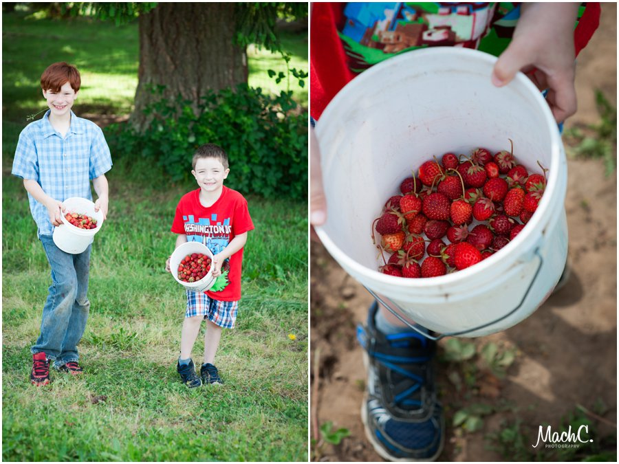 yummy strawberries from philbrook farms