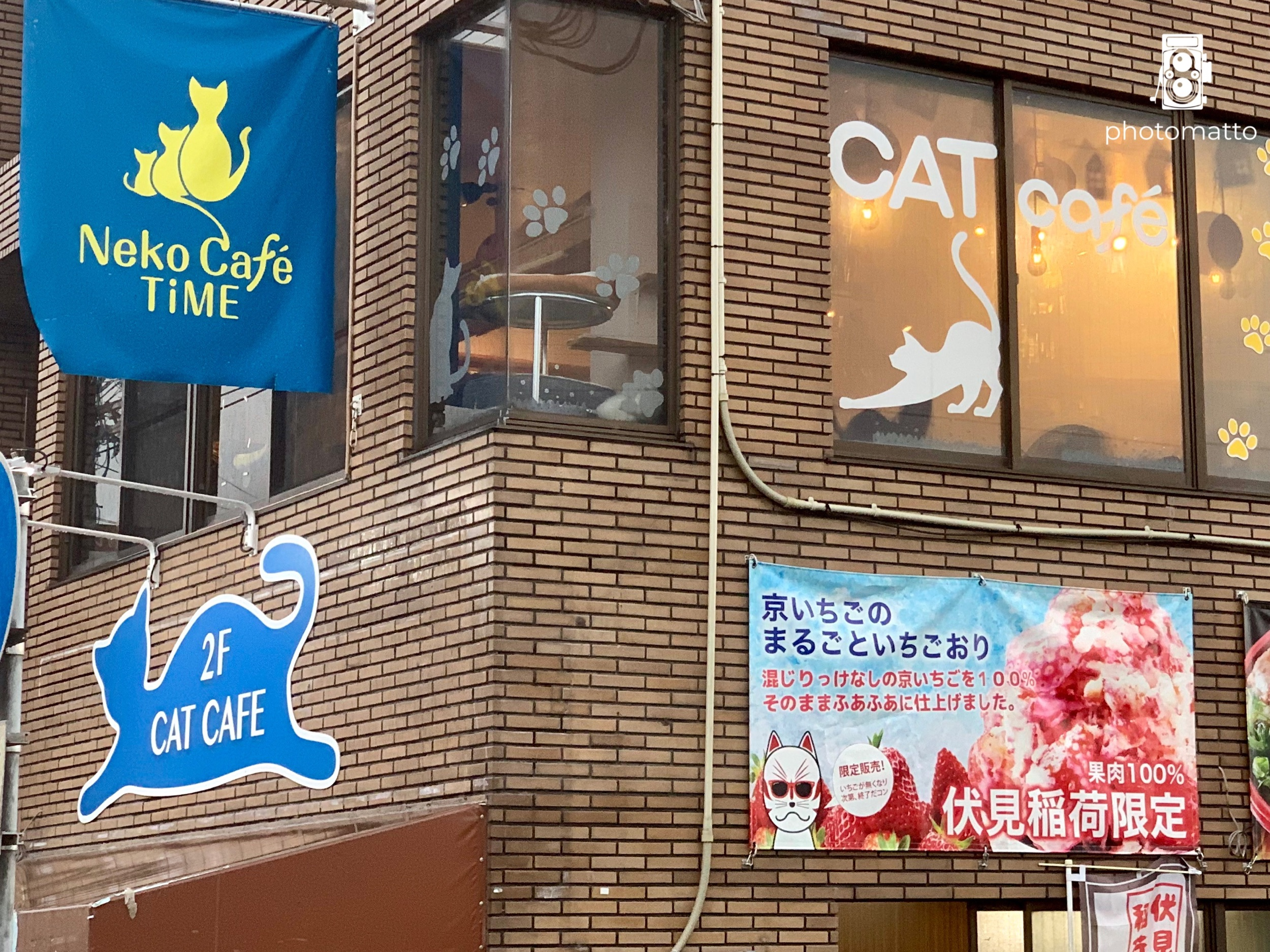 Another cat cafe!
