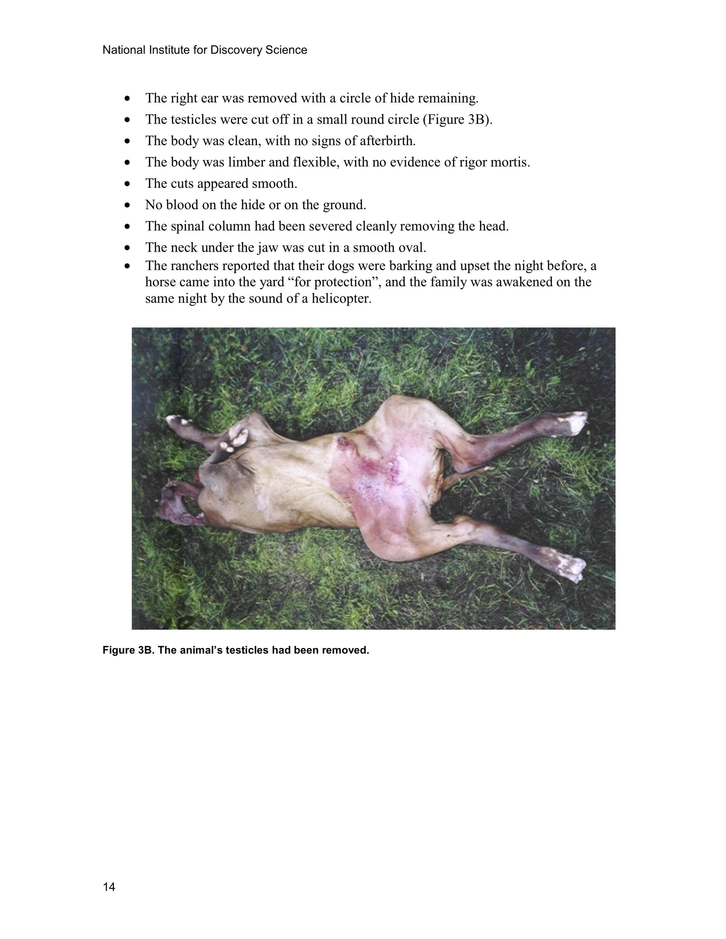 1997 ANIMAL MUTILATION REPORT 13.jpg