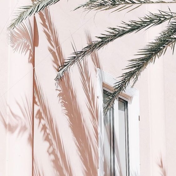 Palm shadows are so aesthetically pleasing 👌🏼 . . . . . #palm #shadow #pinterest #photography #palmshadow #aestheticedits #aestheticedit #pink #colorpalette #colourpalette