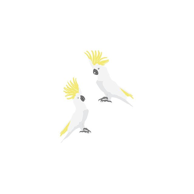 Illustrated these guys for @peppermintgroveau Blooming Botanicals fragrance. Now available in candle and diffuser. This scent is stunning, reminds me of Australian Spring time! And who doesn't love a cheeky cockatoo 💛 . . . . . . #cockatoo #peppermintgrove #peppermintgroveaustralia #bloomingbotanicals #botanical #spring #springtime #birds #australia #fragrance #candle #diffuser #design #designer #graphicdesign #graphicdesigner #packaging #packagingdesign #packagingdesigner #illustration #illustrations #illustrate #instaart #draw #create #digitalart #digitaldesign #wacom #ai