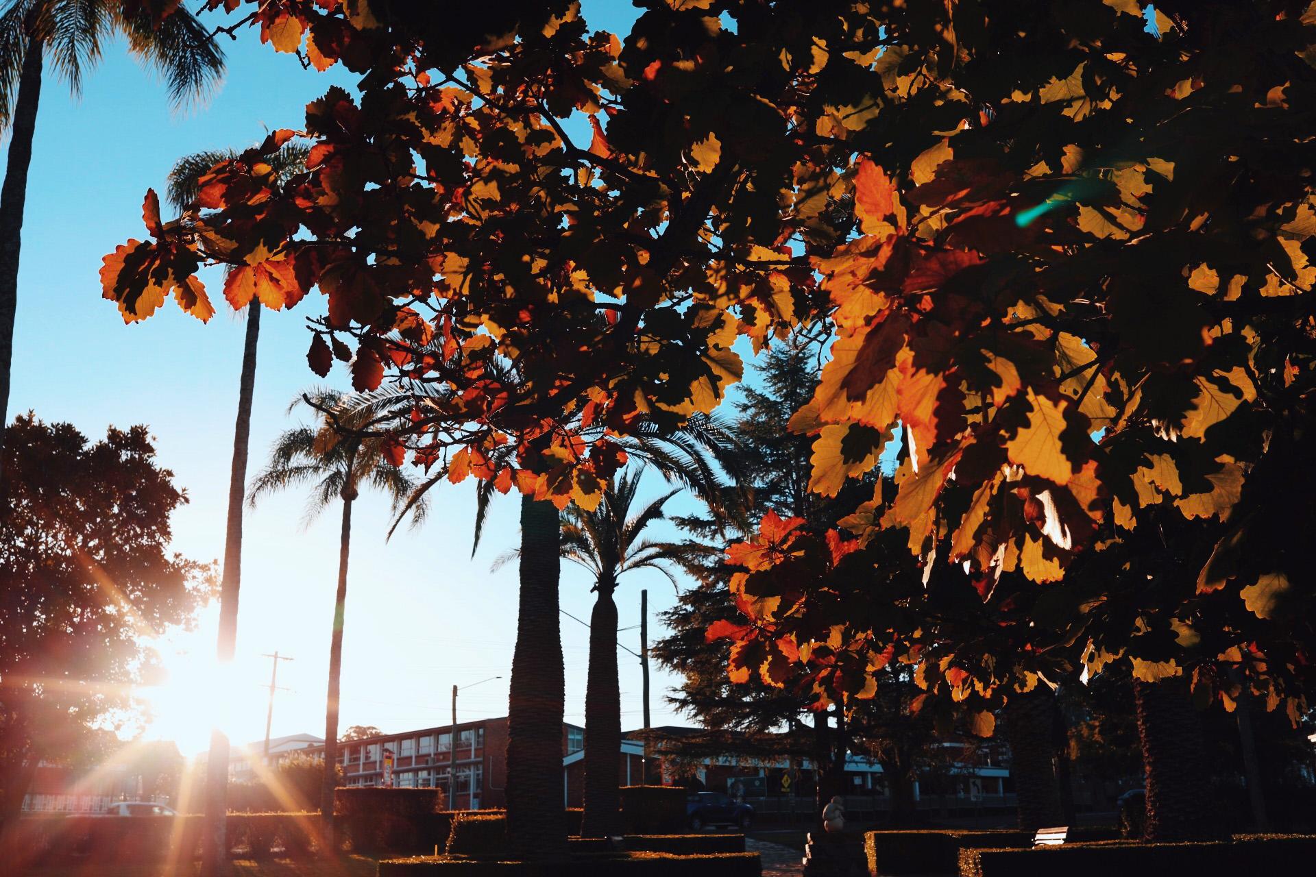 Leaves and light.jpg