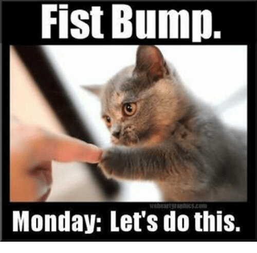 I am this cat. This cat is me. We like Mondays now. Mondays are the best. :)