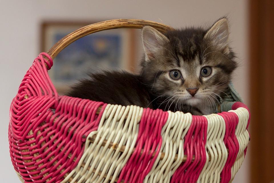 kitten-2973055_960_720.jpg