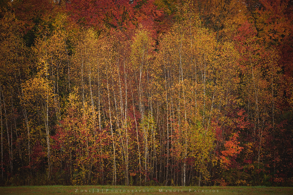Clifton-Park-Fall-Saratoga-New-York-Manuel-Palacios.jpg
