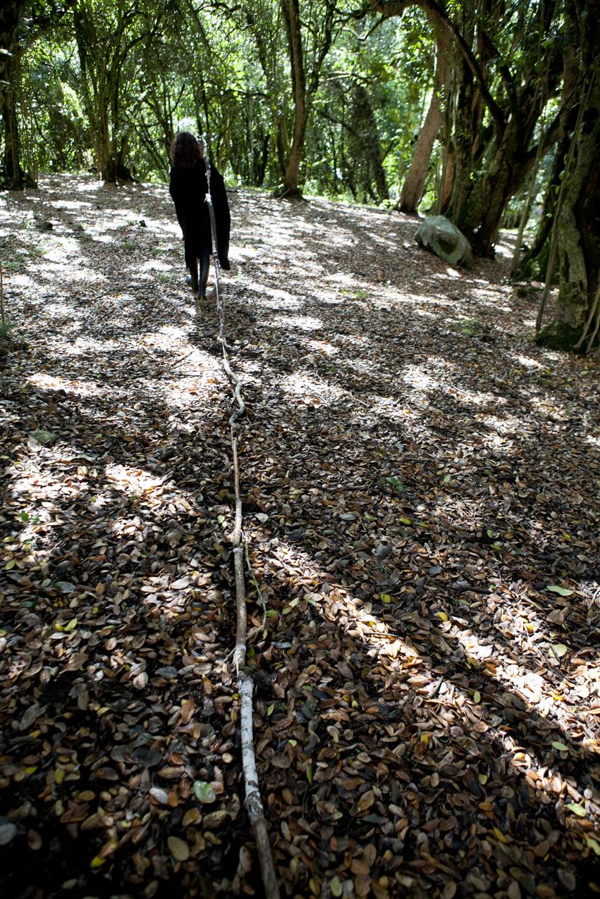 Native Forest, 2013. Lambda print. 80 x 120cm.