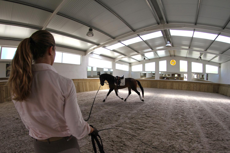Preparação de cavalo pela Morgane Giordimaina