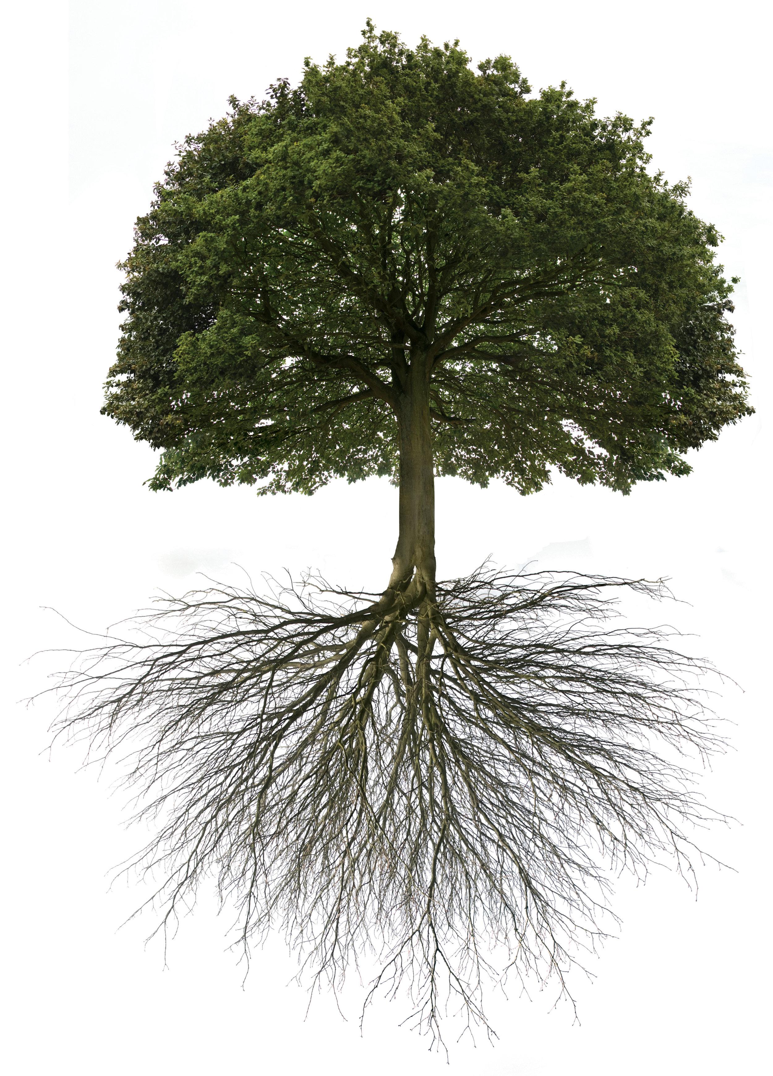 Baum mit wurzel.jpg