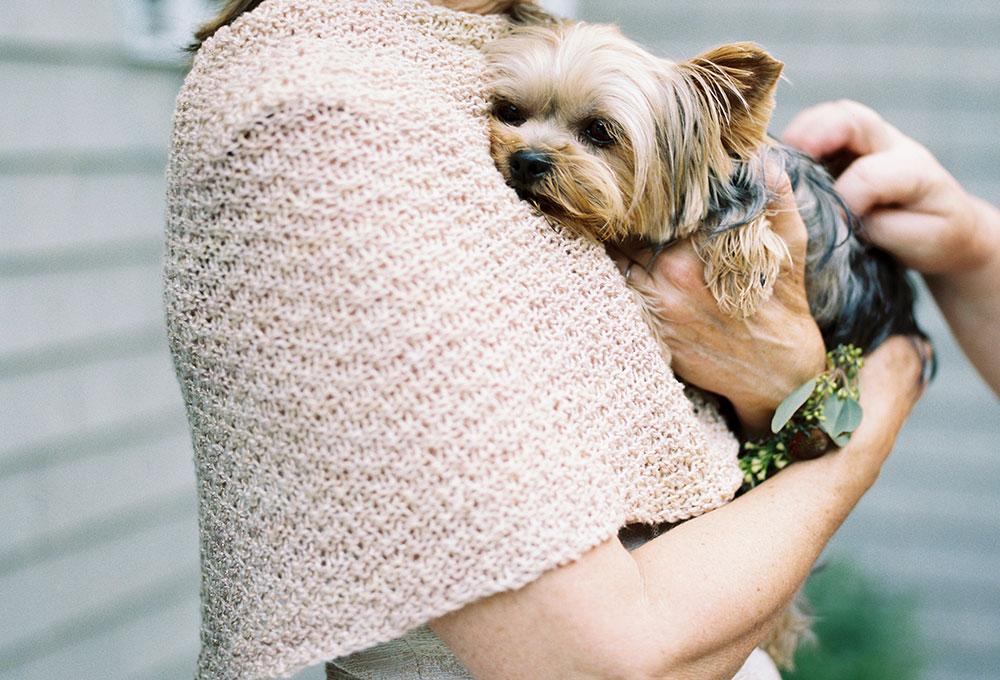 family dog at wedding