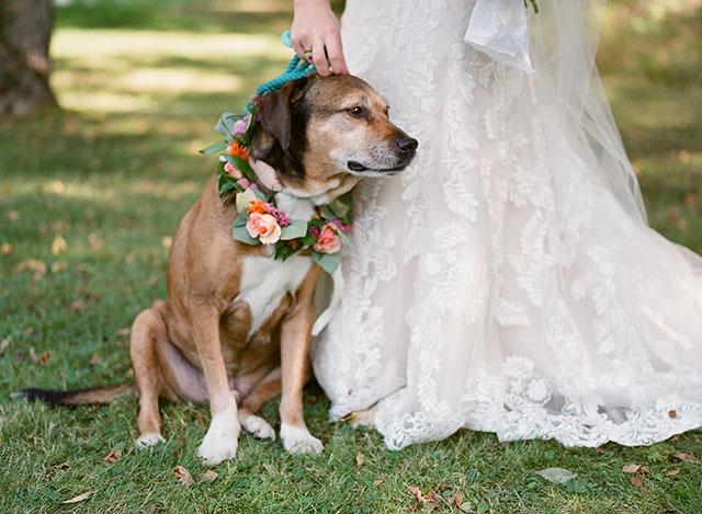 floral collar for dog in wedding - Sarah Der Photography