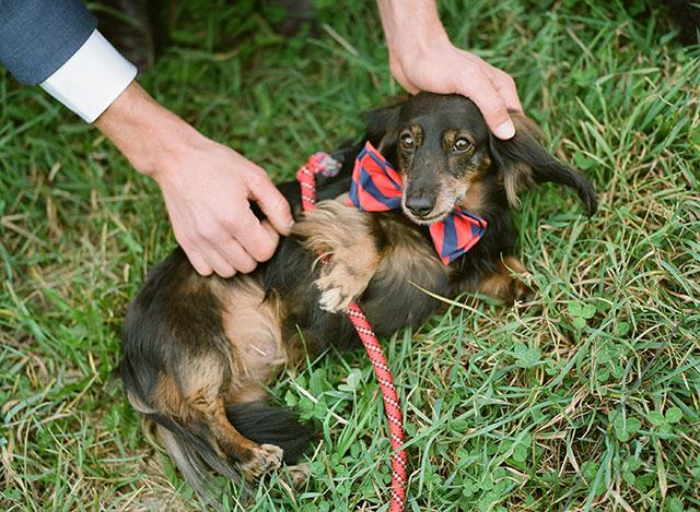 groom pets his dog - Sarah Der Photography