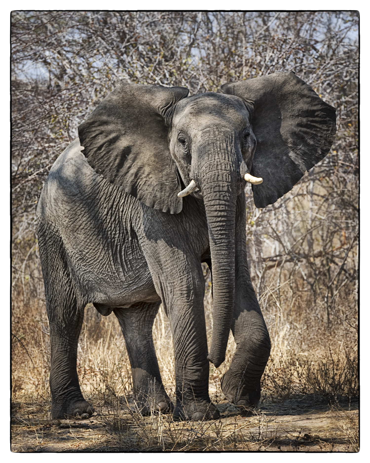 3_Elephant Greeting_web.jpg
