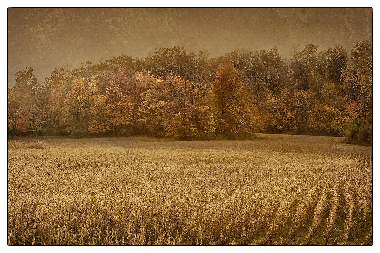 Ohio Field_web.jpg