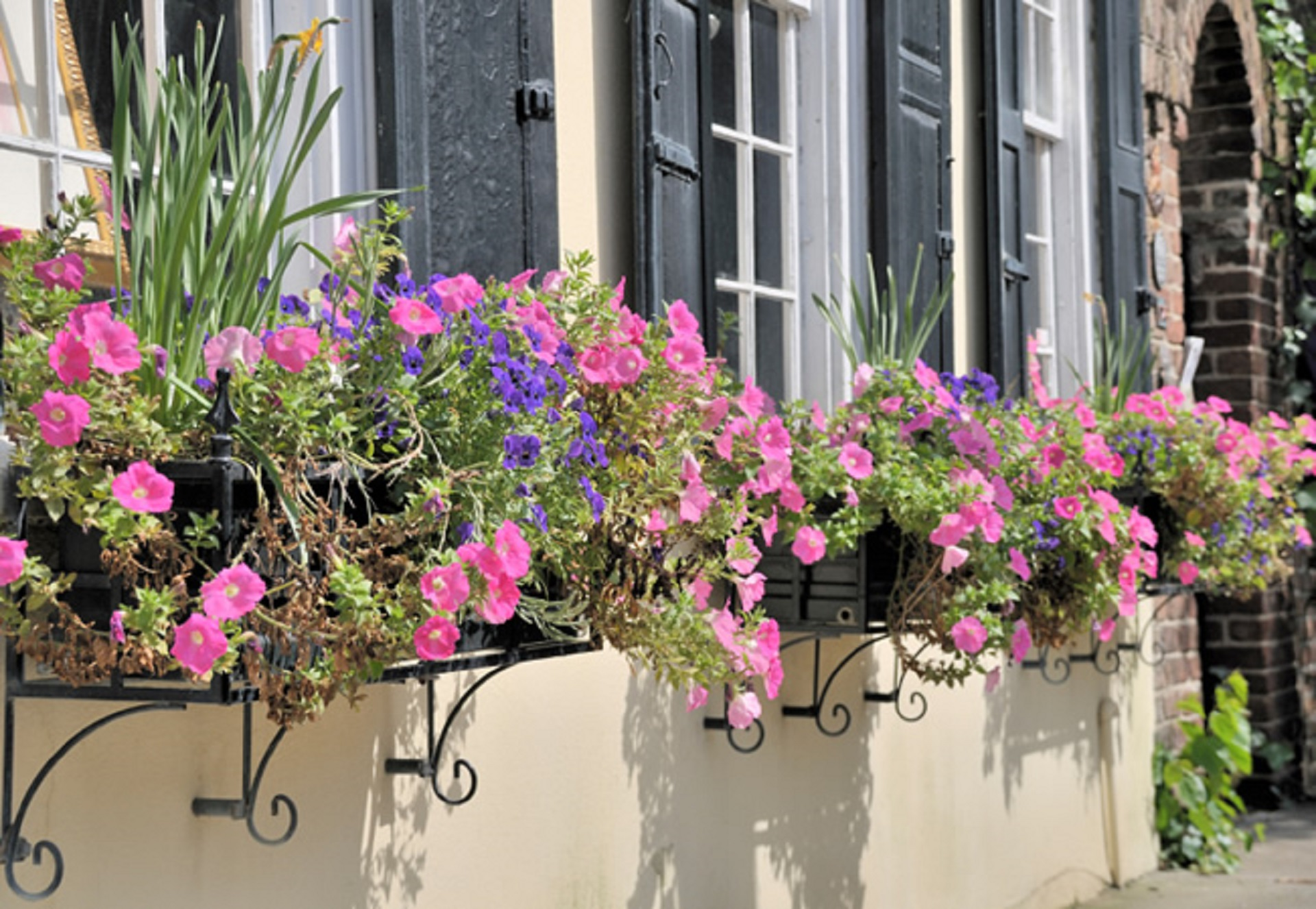 FlowersWindowBoxesCharleston.jpg