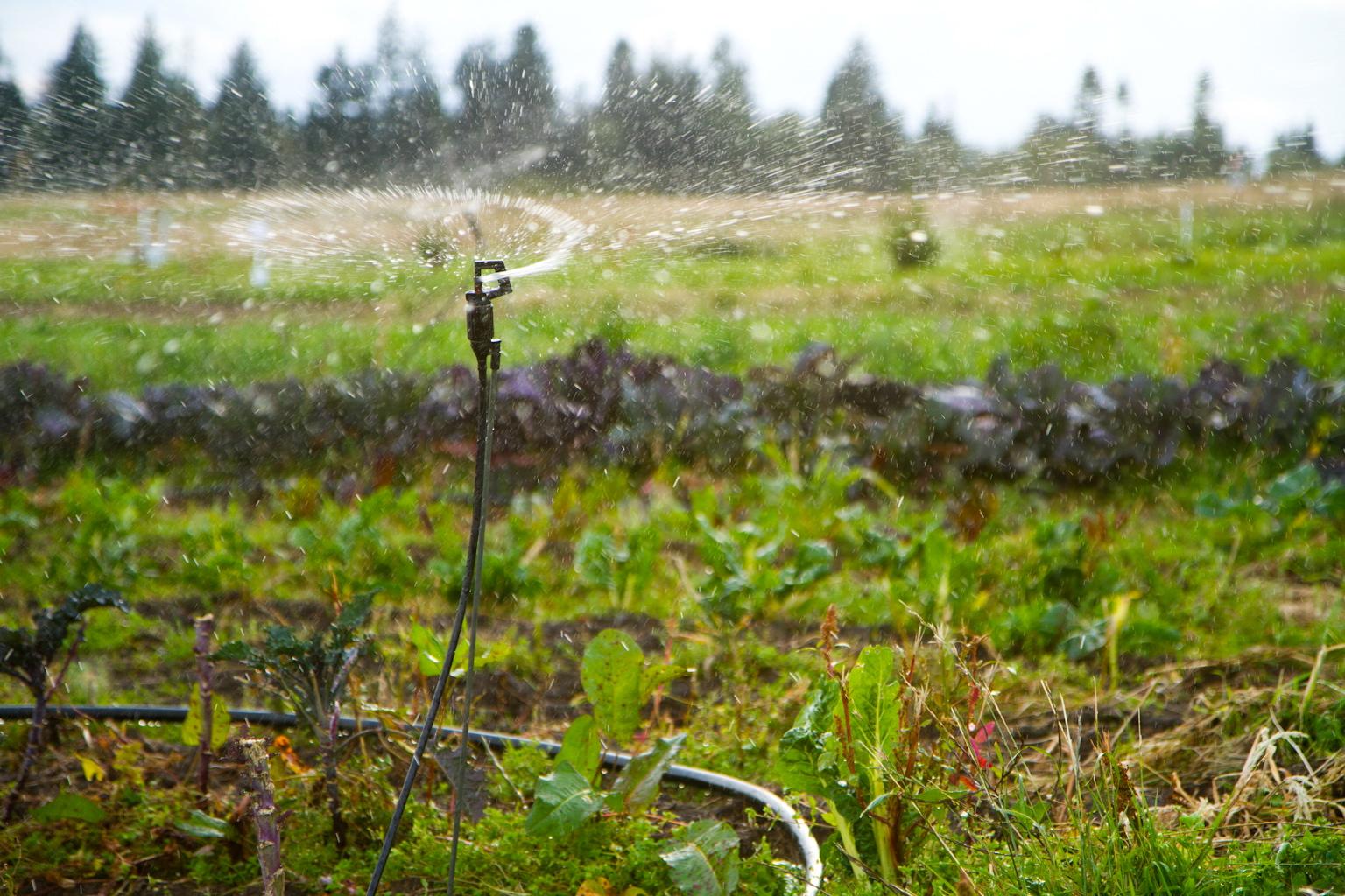 Irrigation: Principles & Practices