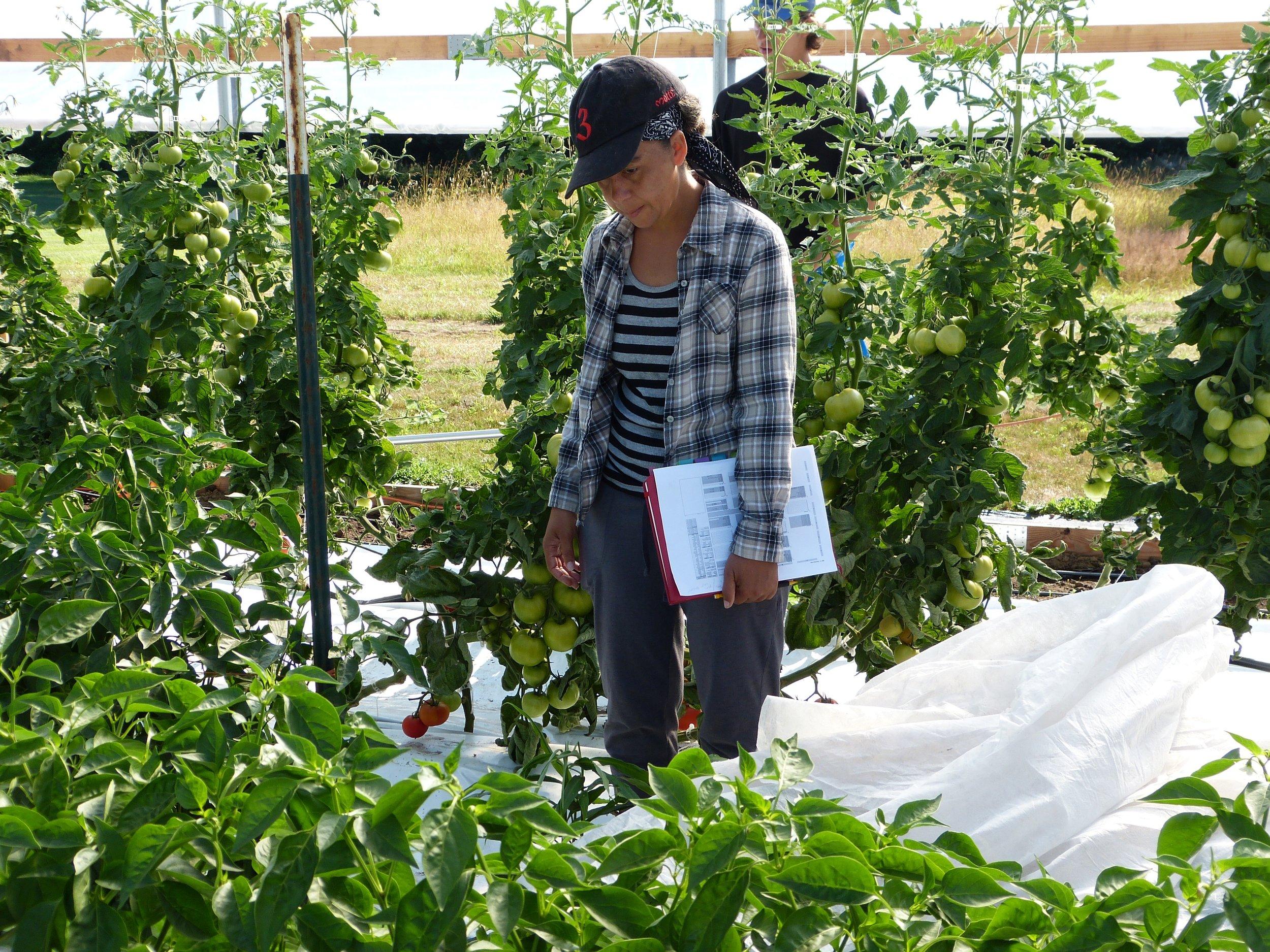 Greenhouse Management