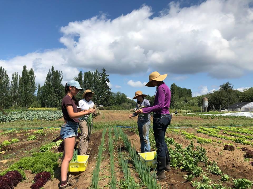 harvest work in July 2018.jpg
