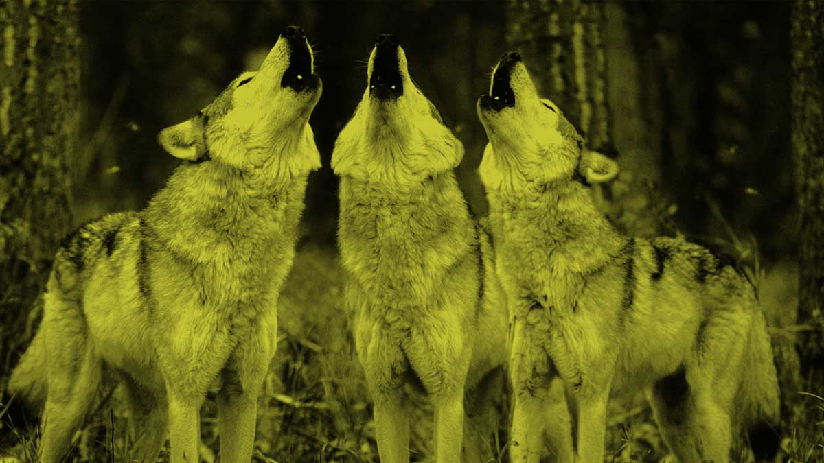 YOUR-WOLF-PACK-no-text-opt.jpg