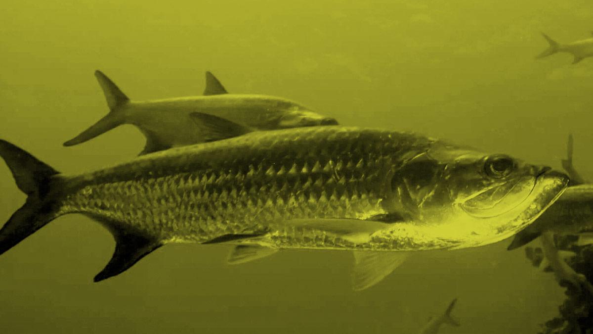 The-Big-Fish_NOTEXT-opt.jpg
