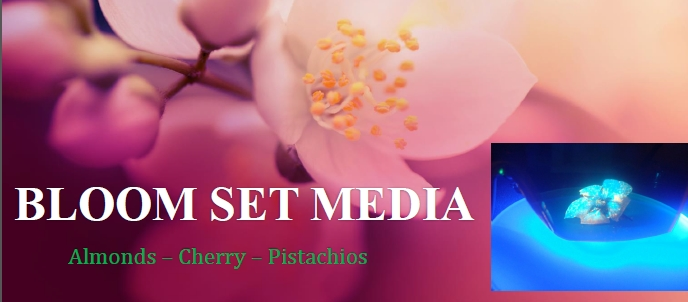 Bloom Set Media