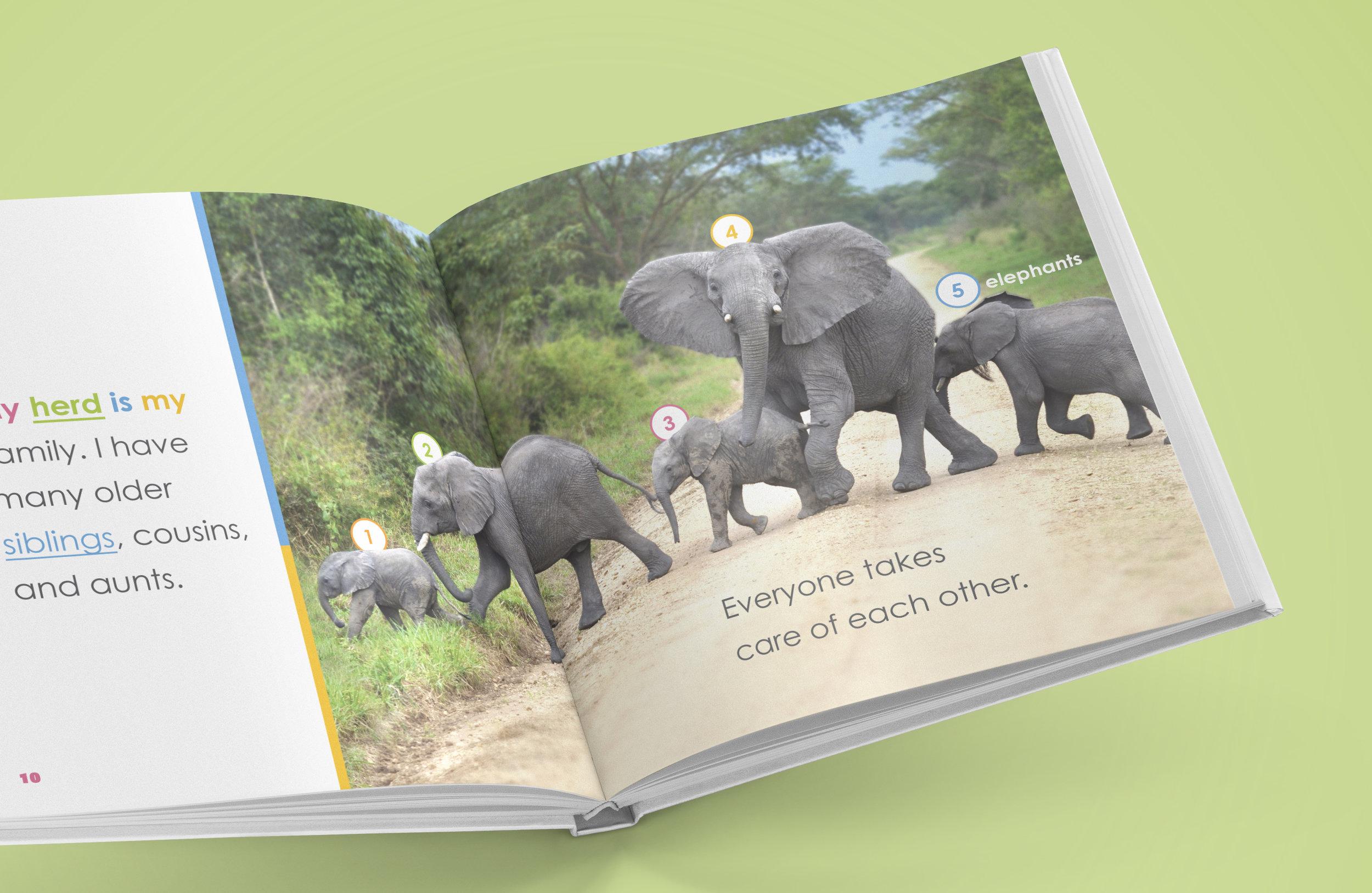 so_elephants_3.jpg
