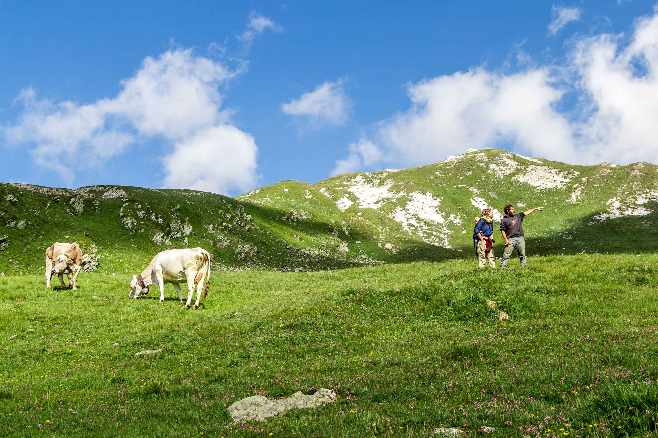 20130805_02540 Auf der Alp.jpg