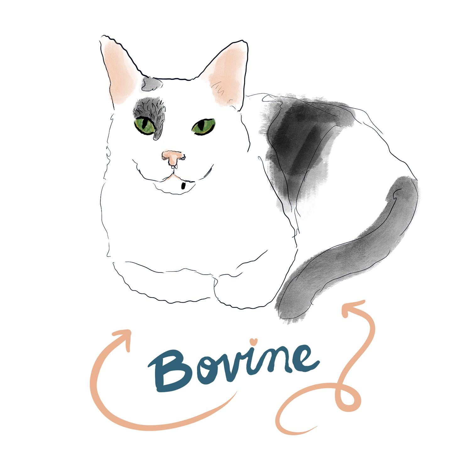 Bovine is 4 years old.