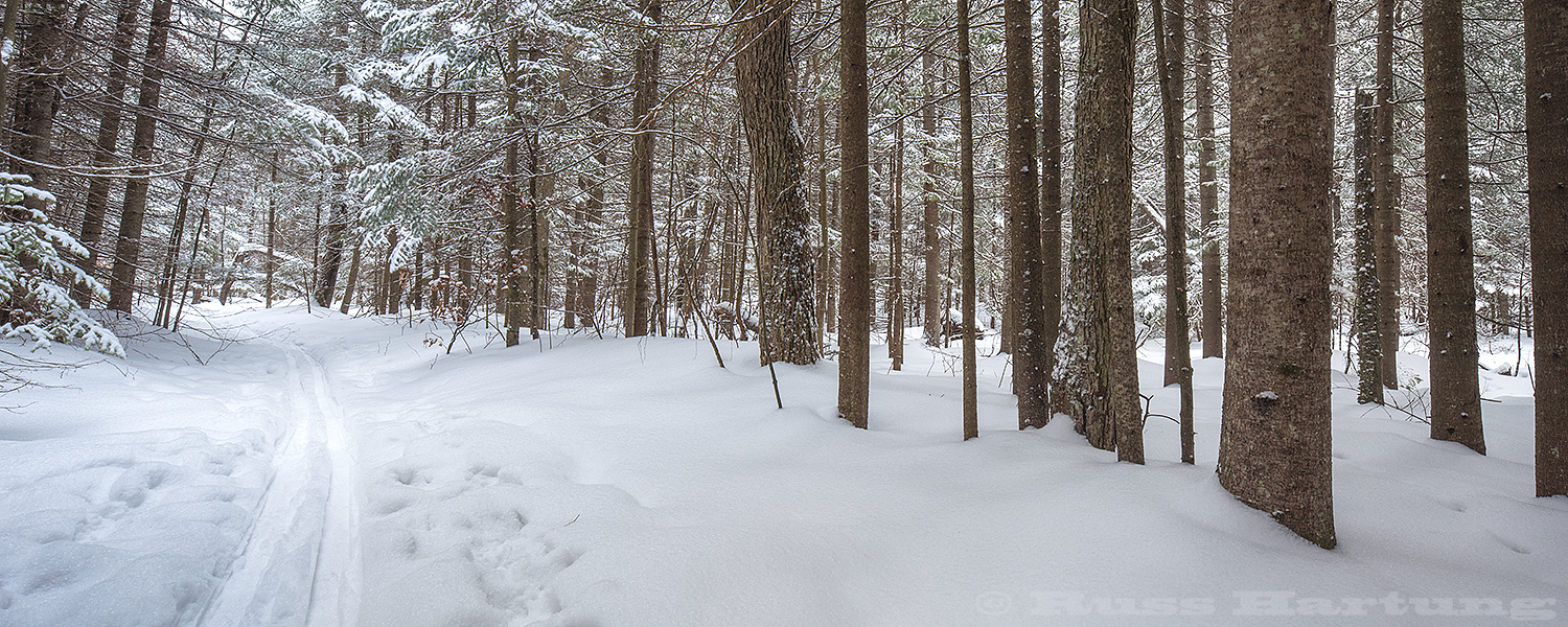 """Back country ski trail on Rand Hill. We call this section of trail """"The Evergreen Cathedral""""."""
