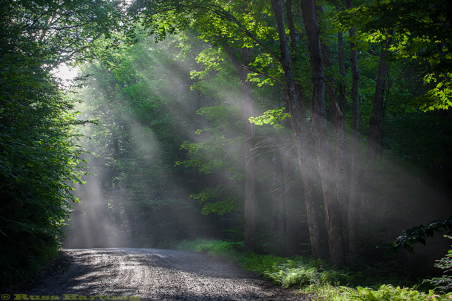 Sunlight filtering through the dust coming off of Floodwood Road in the St. Regis Canoe Wilderness.