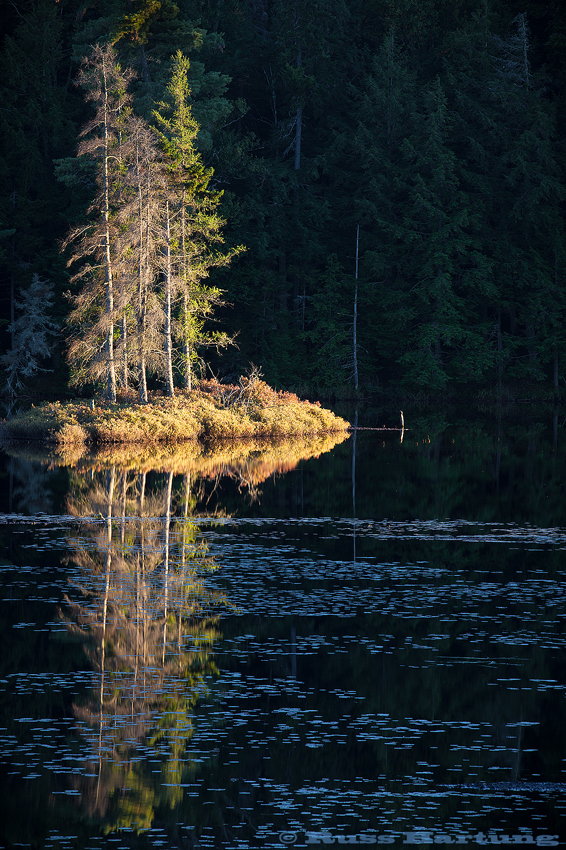 The last, warm rays of the sun shine like a spotlight on a small island on Poliwog Pond.