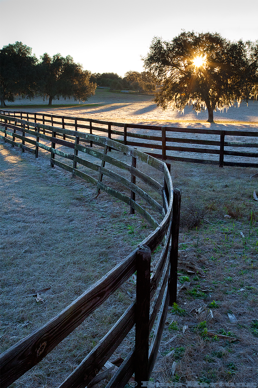 Horse farm at sunrise. Central Florida.