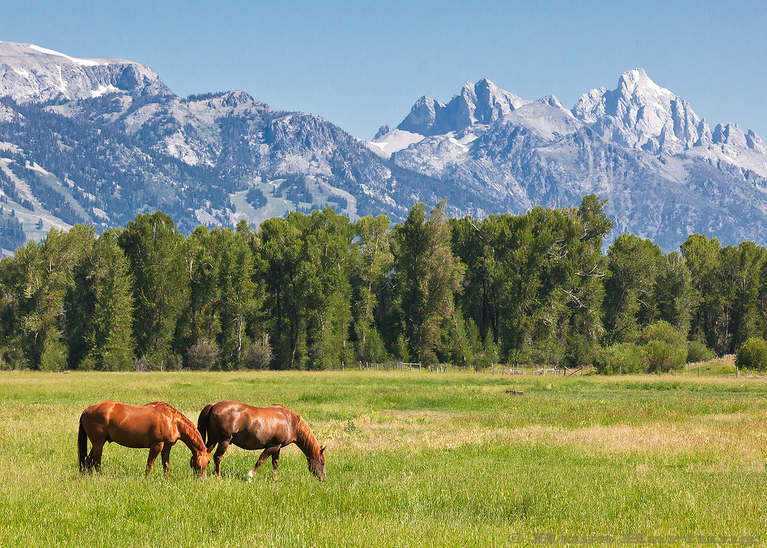 A horse pasture in Jackson, Wyoming with the Tetons in the background.