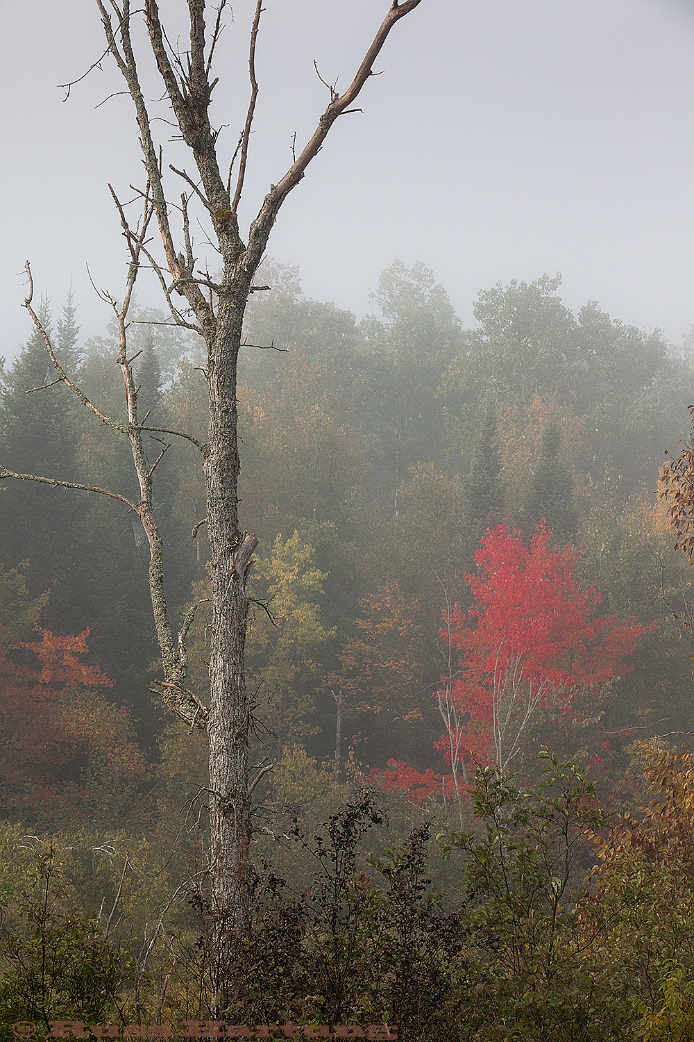 First Fall colors emerge on a misty morning.