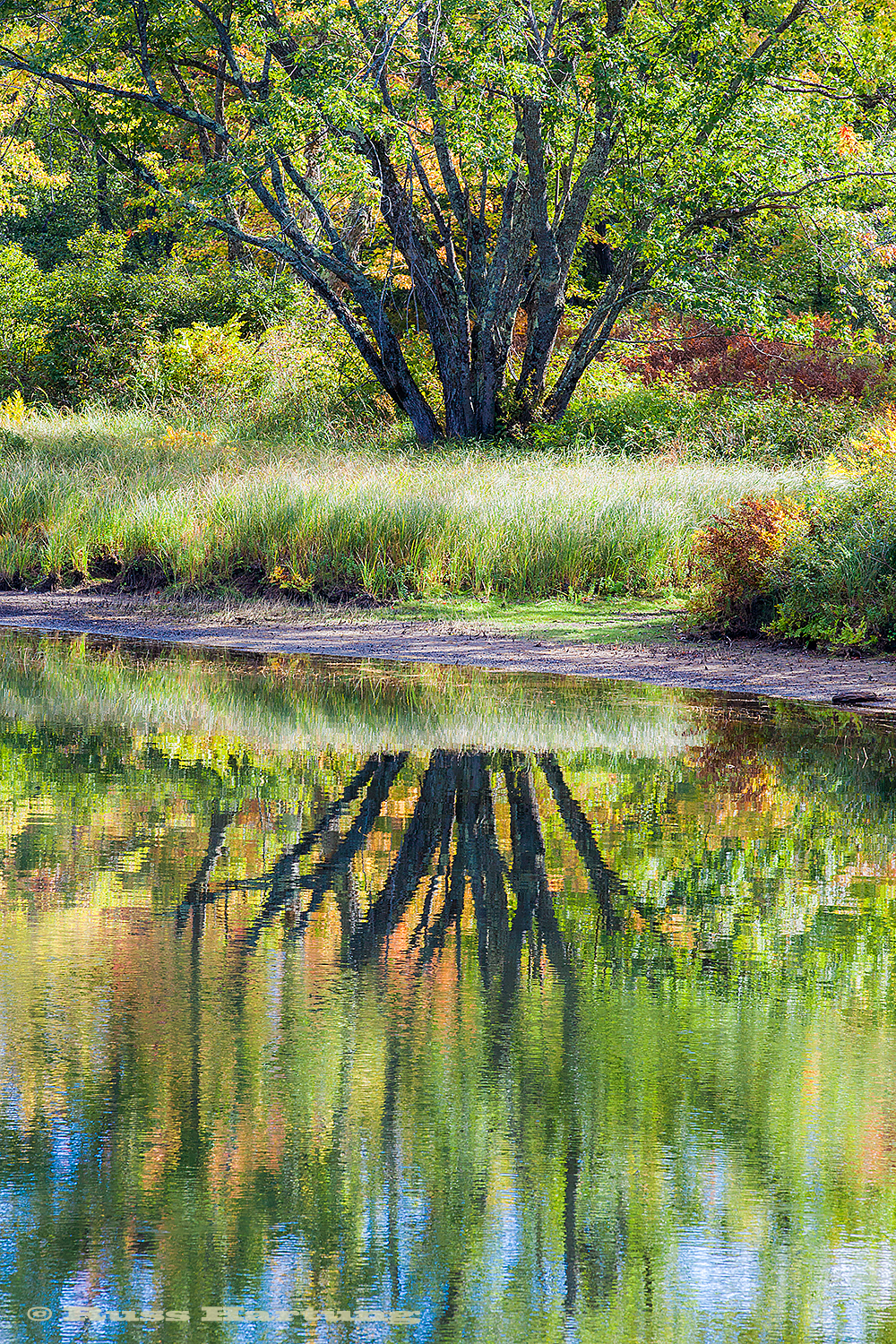 I like the broken reflection of this tree near Lower Saranac Lake. The same spot about 2 weeks later was barren looking after all the grass had died and the leaves had fallen.