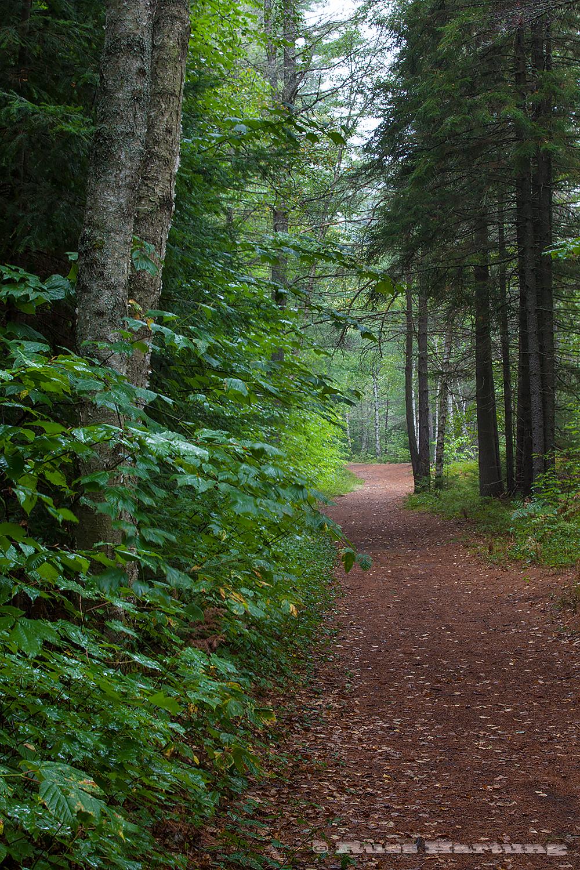 Hiking path near Little Haystack along Lake Kushaqua on a rainy, summer day.