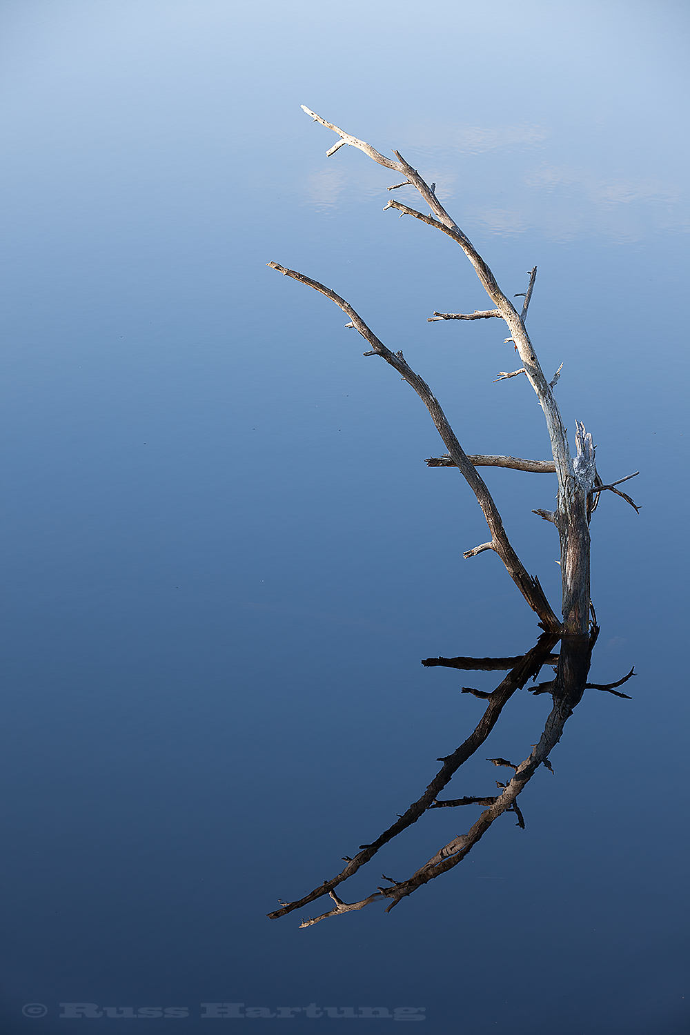 Simple composition of a dead tree limb on an Adirondack lake.
