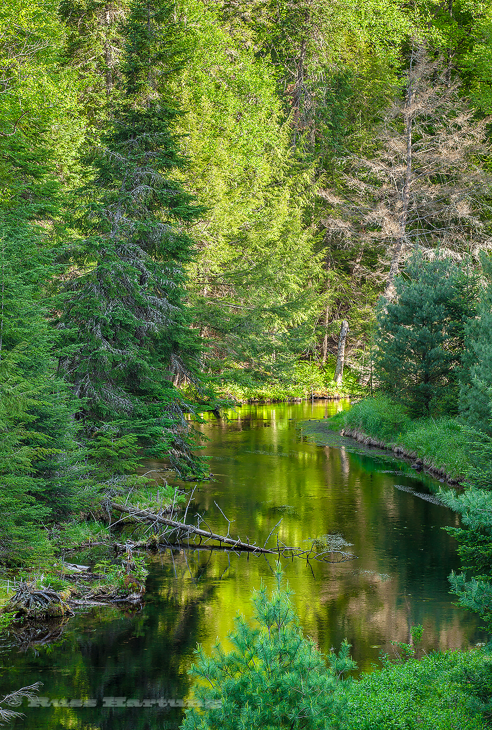 """Green Stream Reflections"" - Jury selection - Adirondack Artist's Guild 2016"