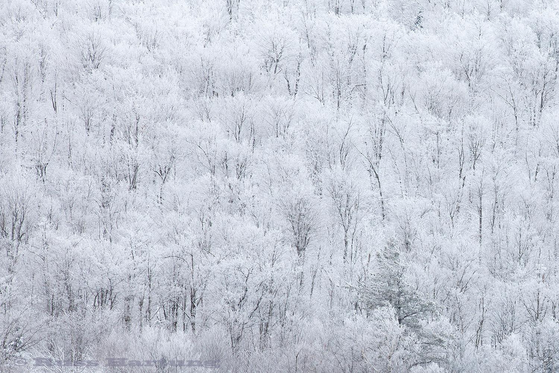 WinterTreePattern©1500px.jpg